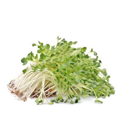 Alfalfa Natural