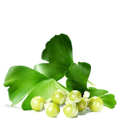Ginkgo biloba planta natural